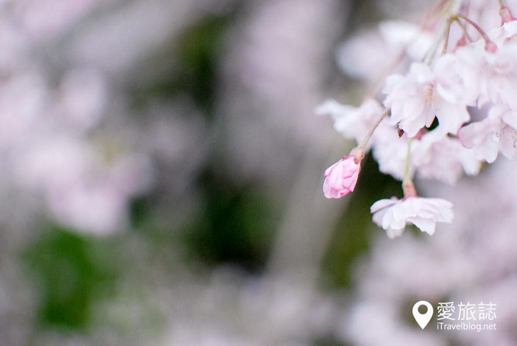 京都赏樱景点 半木之道 25