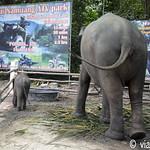01 Viajefilos en Koh Samui, Tailandia 124