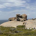 Viajefilos en Australia. Kangaroo 45