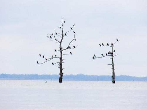 Lake Marion Plantation Islands-017