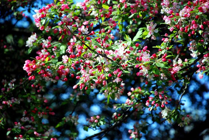 桃花盛开的季节_桃花盛开的季节 - Niu Bee Style