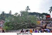 Fallen Shri Balavdra Daru - Hari Boll
