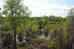 015 Arkansas Swamps