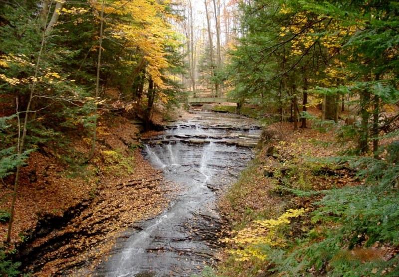 Imagen gratis de un bosque frondos