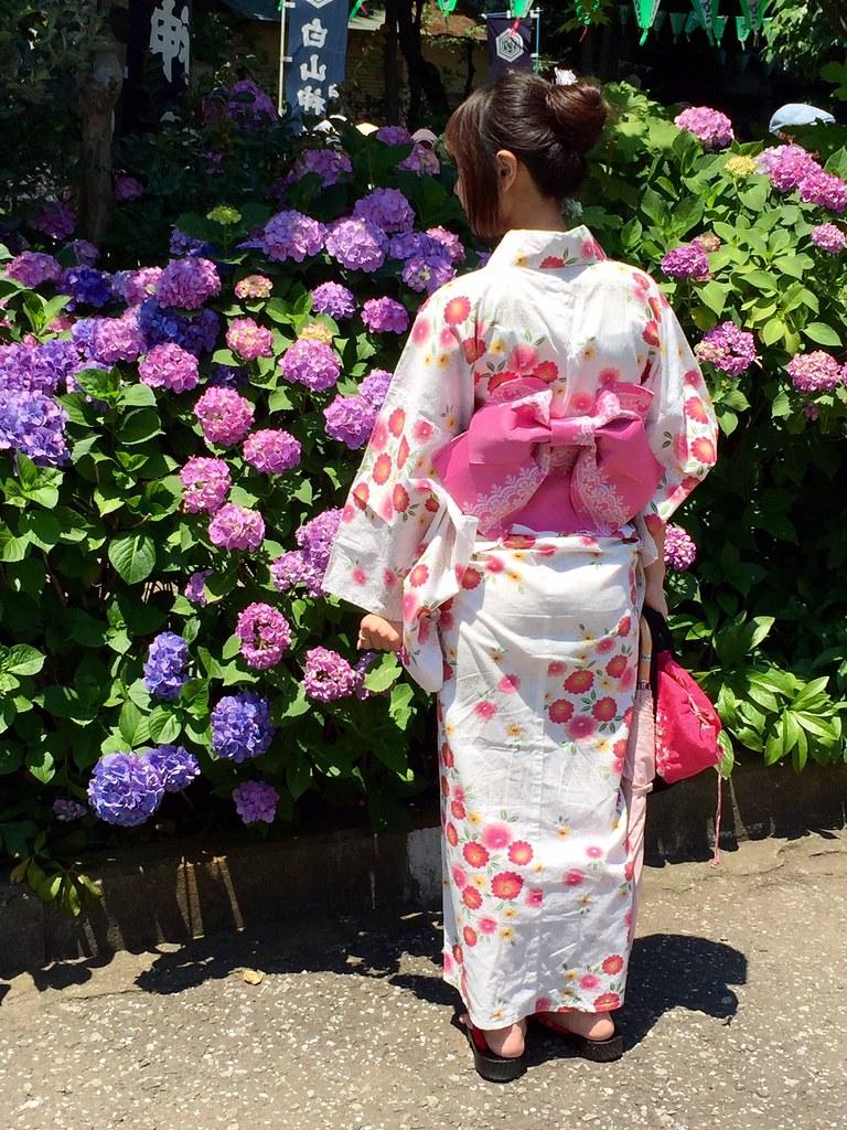 Japanese Kimono wearing lady watching the Ajisai Hydrangea flowers at Hakusan Shrine