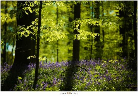 Het groen en paars met tegenlicht