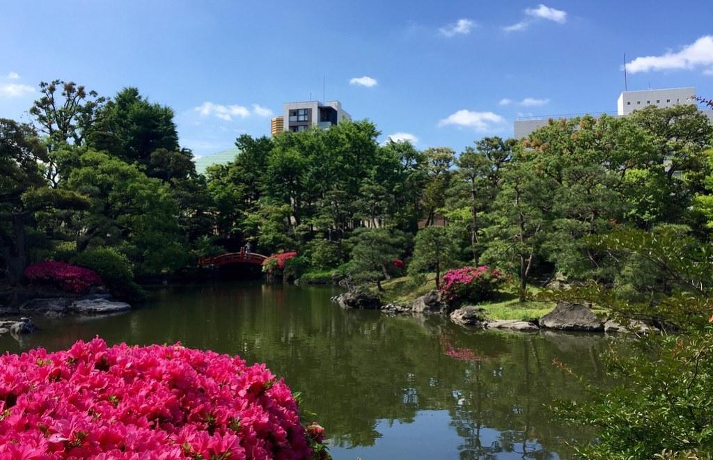 Beautiful flowers at the Old Yasuda Garden in Ryogoku