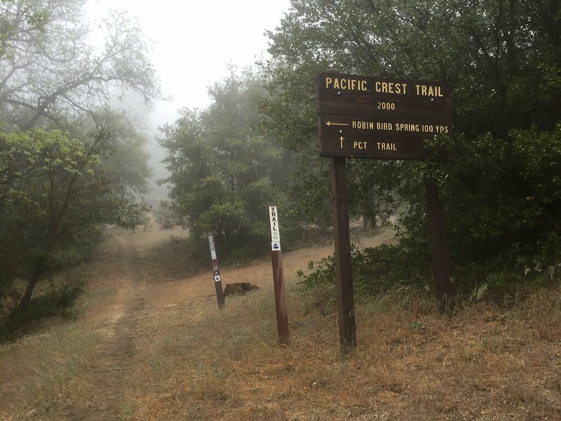PCT Day 45