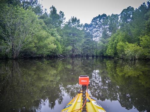Sparkleberry Swamp-114