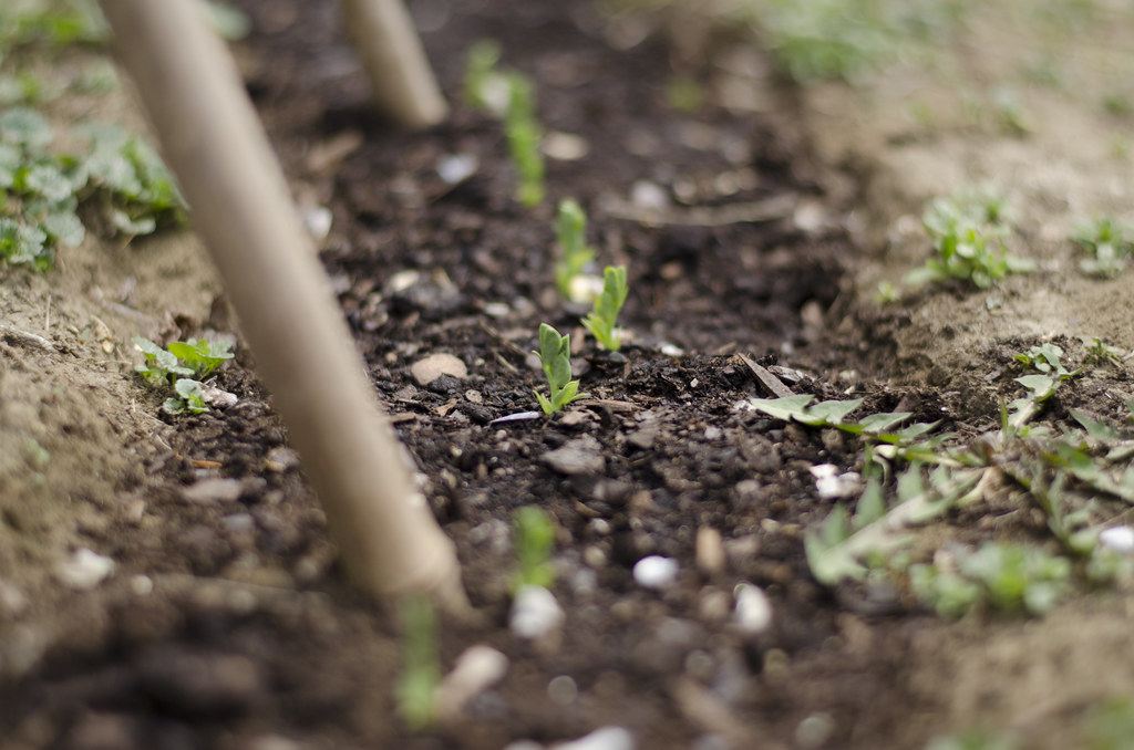 garden 2015 // the beginning