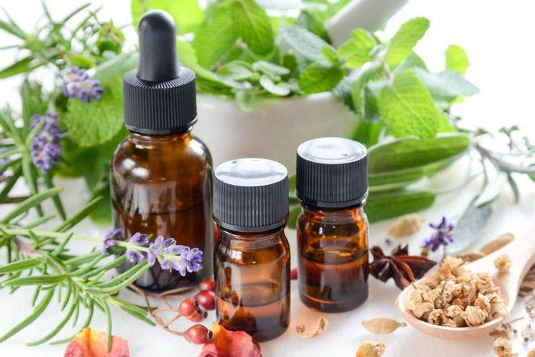 F rmacos medicados y su uso preferente que las hierbas for Hierbas y plantas medicinales