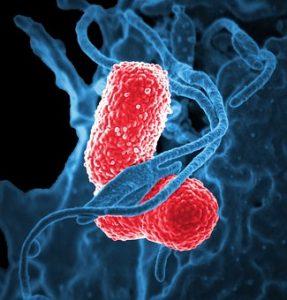 Bacteria: microorganismo patógeno