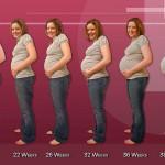 Cambios producidos durante el embarazo (II). Segundo trimestre.