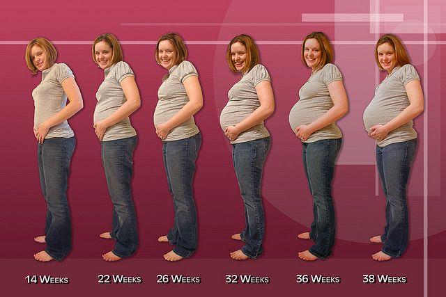 evolución-en-el-embarazo