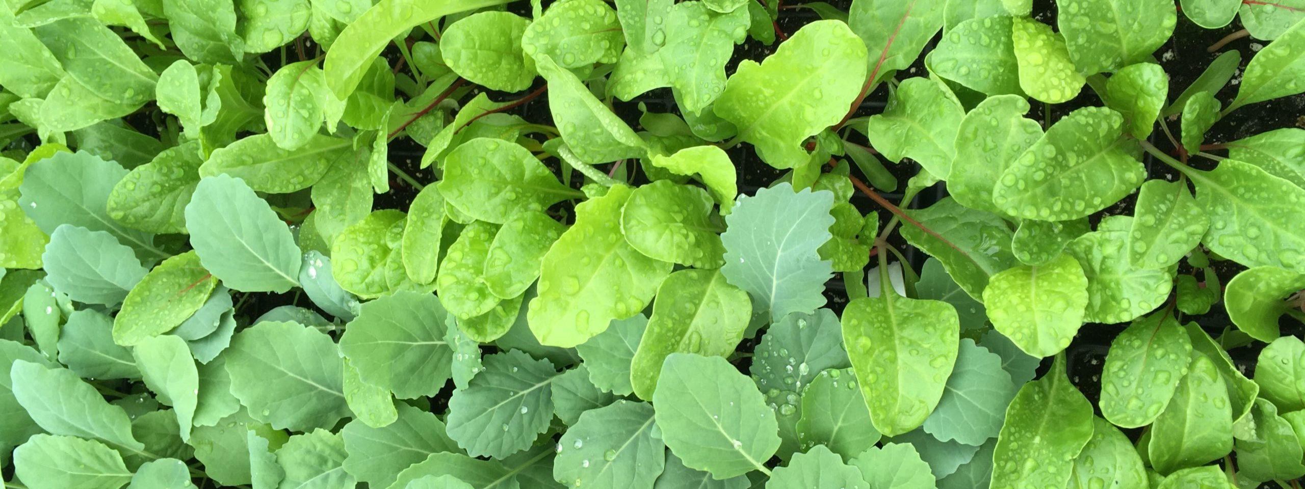 Soil Health & Seedlings