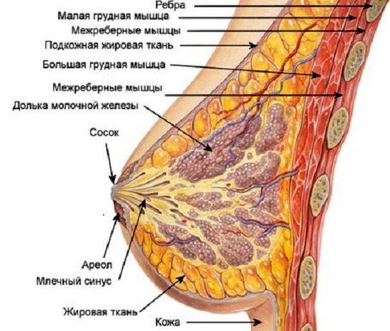 Мастопатия грудь