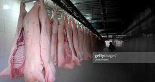 obat antibiotik babi