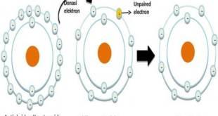 Peran Antioksidan Karotenoid Penangkal Radikal Bebas Penyebab Berbagai Penyakit