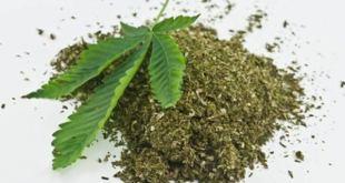 Larutan Ganja Dronabinol, Terapi Oral Baru untuk Anoreksia pada Pasien HIV/AIDS
