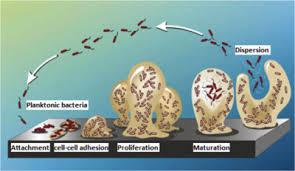 Biofilm dan Pembentukannya dalam Sistem Pengolahan Air Farmasi Industri