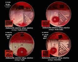 tes mikrobiologi