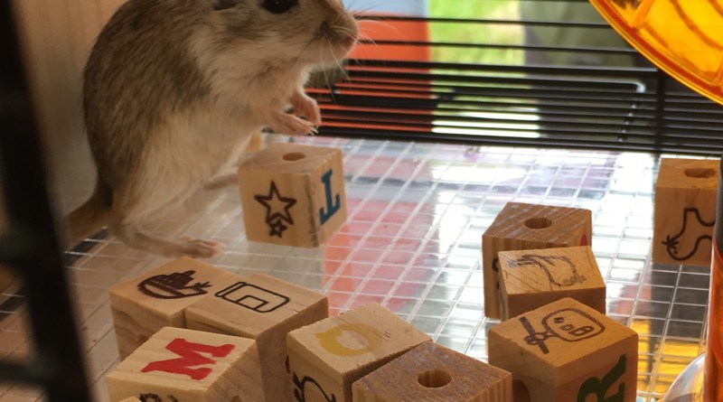 Our gerbils are having a Block Party in their new Qute!