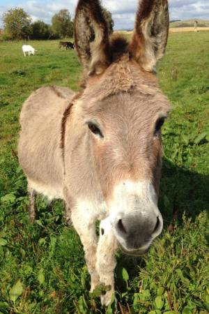 Photo of Patrick, the donkey