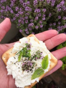 Cracker with homemade soft cheese and herbs