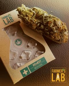 Marijuana Seeds for Sale