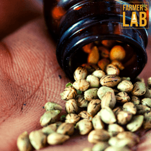 Cannabis Seeds Shipped Directly to Your Door in Arcata, CA. Farmers Lab Seeds is your #1 supplier to growing Cannabis in Arcata, California.