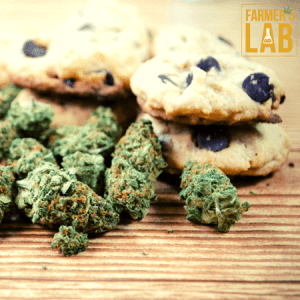 Cannabis Seeds Shipped Directly to Your Door in Bothell, WA. Farmers Lab Seeds is your #1 supplier to growing Cannabis in Bothell, Washington.