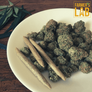 Cannabis Seeds Shipped Directly to Your Door in Campbell River, BC. Farmers Lab Seeds is your #1 supplier to growing Cannabis in Campbell River, British Columbia.