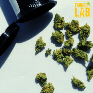 Cannabis Seeds Shipped Directly to Your Door in Clinton, IL. Farmers Lab Seeds is your #1 supplier to growing Cannabis in Clinton, Illinois.