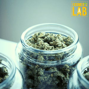 Cannabis Seeds Shipped Directly to Your Door in Coral Hills, MD. Farmers Lab Seeds is your #1 supplier to growing Cannabis in Coral Hills, Maryland.