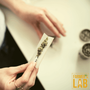Cannabis Seeds Shipped Directly to Your Door in Dallas, TX. Farmers Lab Seeds is your #1 supplier to growing Cannabis in Dallas, Texas.