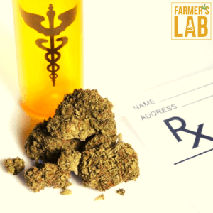 Cannabis Seeds Shipped Directly to Your Door in East Alton, IL. Farmers Lab Seeds is your #1 supplier to growing Cannabis in East Alton, Illinois.