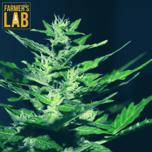 Cannabis Seeds Shipped Directly to Your Door in East Liverpool, OH. Farmers Lab Seeds is your #1 supplier to growing Cannabis in East Liverpool, Ohio.