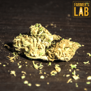 Cannabis Seeds Shipped Directly to Your Door in Eloy, AZ. Farmers Lab Seeds is your #1 supplier to growing Cannabis in Eloy, Arizona.