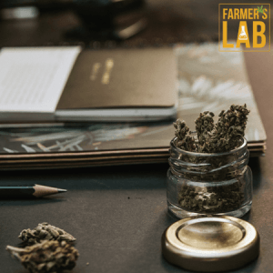 Cannabis Seeds Shipped Directly to Your Door in Garberville, CA. Farmers Lab Seeds is your #1 supplier to growing Cannabis in Garberville, California.