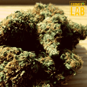 Cannabis Seeds Shipped Directly to Your Door in Harrisonville, MO. Farmers Lab Seeds is your #1 supplier to growing Cannabis in Harrisonville, Missouri.