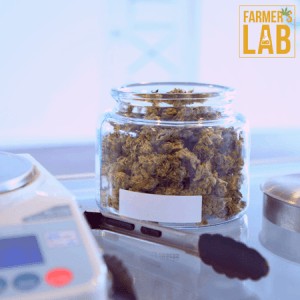 Cannabis Seeds Shipped Directly to Your Door. Farmers Lab Seeds is your #1 supplier to growing Cannabis in Idaho.