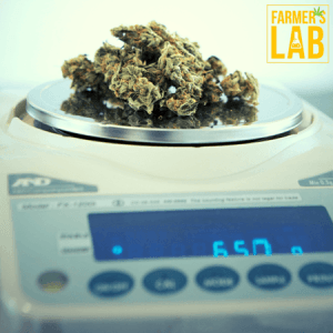 Cannabis Seeds Shipped Directly to Your Door in Latimer, MS. Farmers Lab Seeds is your #1 supplier to growing Cannabis in Latimer, Mississippi.