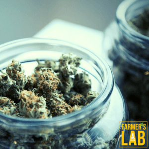 Cannabis Seeds Shipped Directly to Your Door in Mont-Joli, QC. Farmers Lab Seeds is your #1 supplier to growing Cannabis in Mont-Joli, Quebec.