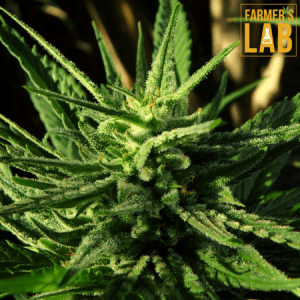 Cannabis Seeds Shipped Directly to Your Door in Moss Point, MS. Farmers Lab Seeds is your #1 supplier to growing Cannabis in Moss Point, Mississippi.