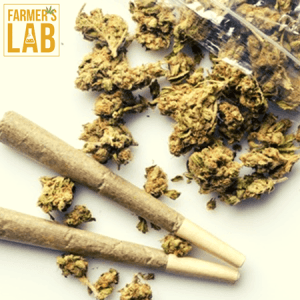 Cannabis Seeds Shipped Directly to Your Door in Pleasantville, NJ. Farmers Lab Seeds is your #1 supplier to growing Cannabis in Pleasantville, New Jersey.