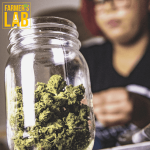 Cannabis Seeds Shipped Directly to Your Door in Sale Creek, TN. Farmers Lab Seeds is your #1 supplier to growing Cannabis in Sale Creek, Tennessee.