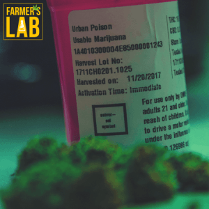 Cannabis Seeds Shipped Directly to Your Door in Ulysses, KS. Farmers Lab Seeds is your #1 supplier to growing Cannabis in Ulysses, Kansas.