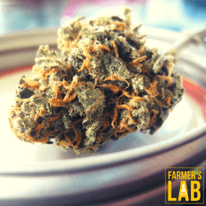 Cannabis Seeds Shipped Directly to Your Door. Farmers Lab Seeds is your #1 supplier to growing Cannabis in Utah.