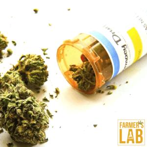 Marijuana Seeds Shipped Directly to Arlington, VA. Farmers Lab Seeds is your #1 supplier to growing Marijuana in Arlington, Virginia.