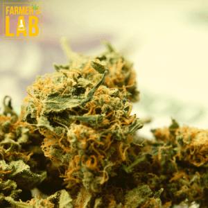 Marijuana Seeds Shipped Directly to Benton, AR. Farmers Lab Seeds is your #1 supplier to growing Marijuana in Benton, Arkansas.